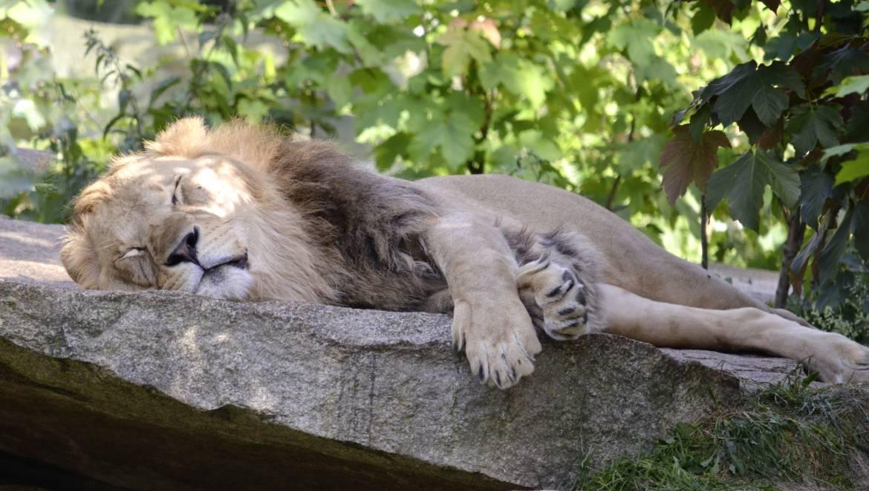 Ergonomia del Sonno – Posizioni giuste per dormire